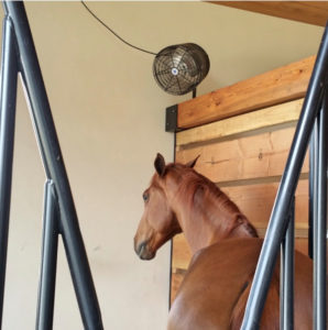 "A horse enjoying the air stream of a 12"" Cool Barns Stall Fan"